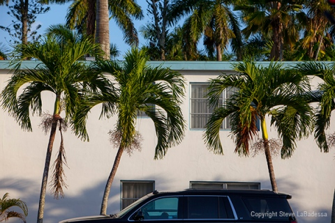 Palm trees, cars and architecture